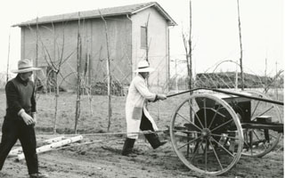 Sowing and cultivation