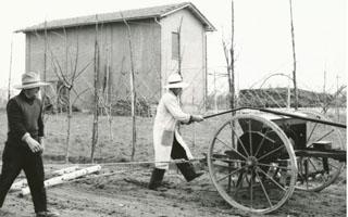 La semina e le cure di coltivazione