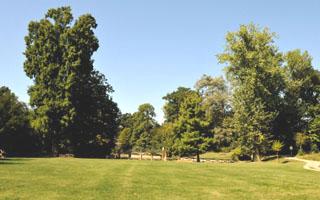 Specie arboree