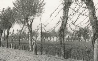 I filari di alberi e viti