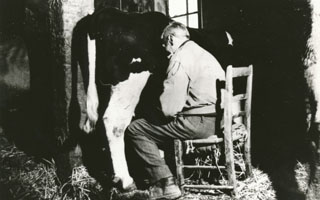 From cows to the dairy industry