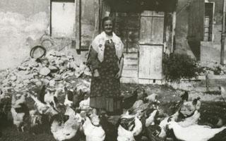 The henhouse and chicken raising