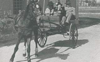 """Il cavallo, il calesse e l'orgoglio """"contadinesco"""""""