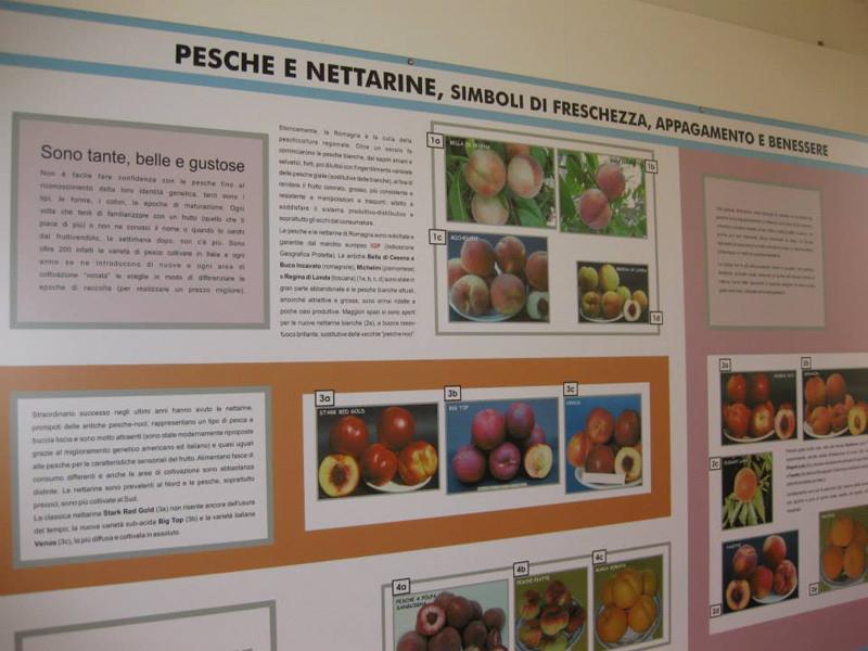 08 - La frutta si conosce mangiandola