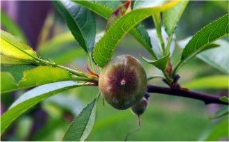 Pomario - i primi frutti 2015